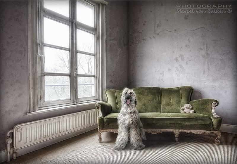 Dogfaith